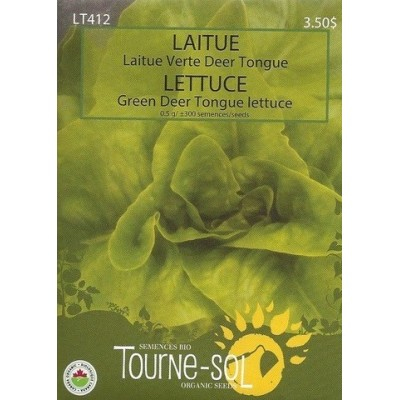 Deer Tongue green lettuce